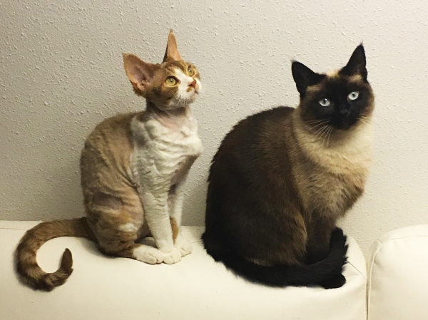 Topic des chats - Page 6 700-cats-2